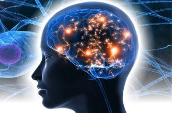 neuroscience study