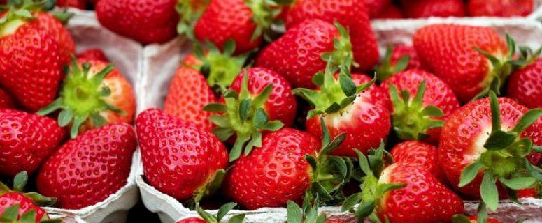 strawberries study
