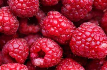Rasberry Study