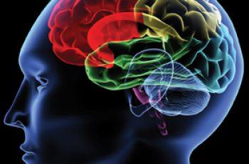 Neurology study